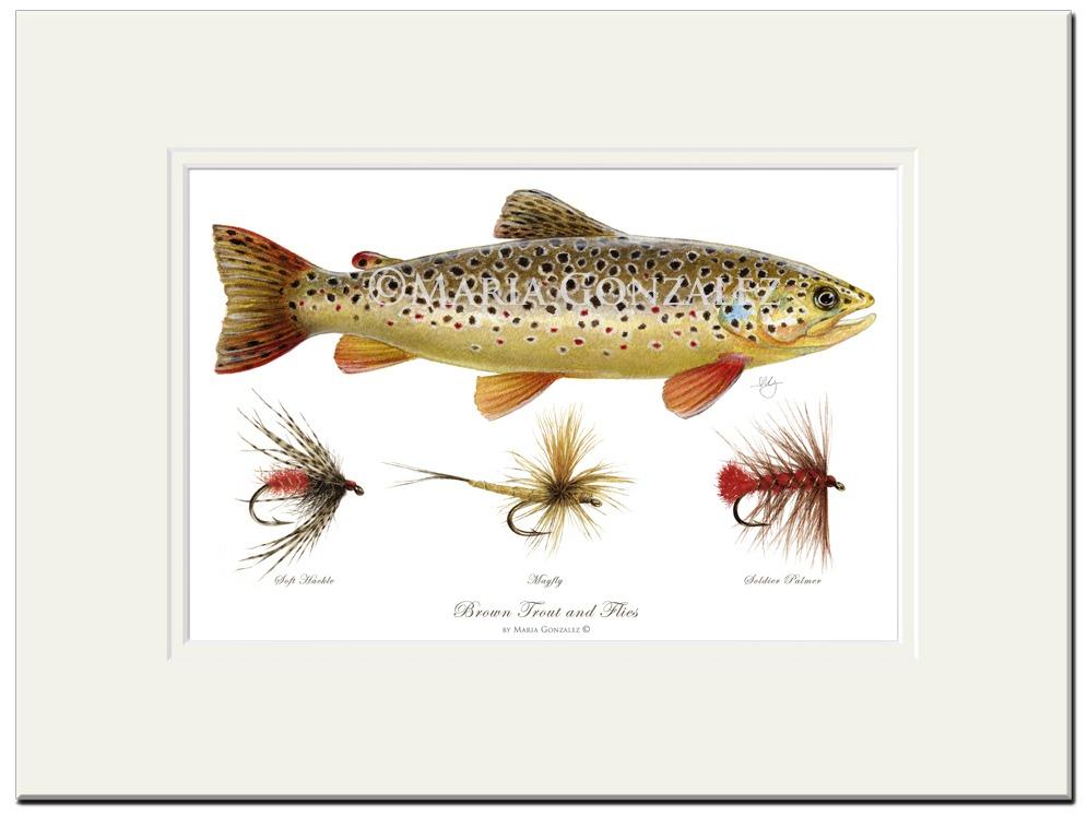 Brown Trout & Flies by Maria Gonzalez
