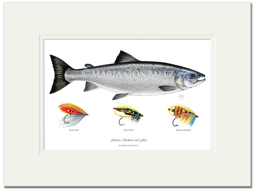 Atlantic Salmon & Flies Signed Print by Maria Gonzalez