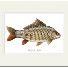 Common Carp Print by Maria Gonzalez