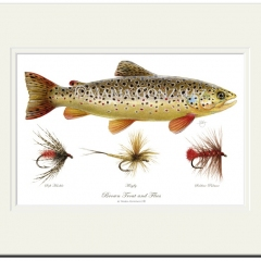 Brown Trout & Flies by Maria Gonzalez