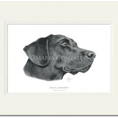 Black Labrador Signed Print by Maria Gonzalez