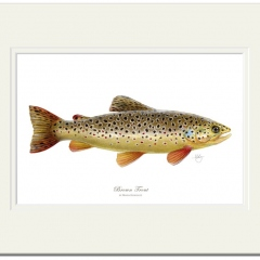 Brown Trout by Maria Gonzalez